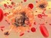 Tế bào máu trắng
