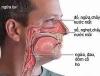 Các loại viêm mũi